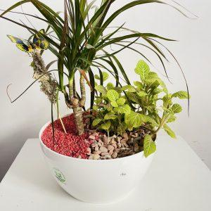 Composition de Plantes Cadeau