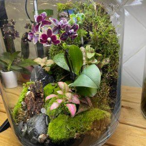 Terrarium Jungle Love Orchid